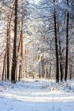 Winter landscape. Snowy nature. Snow-covered forest. Christmas weather. Snow snow stock photos