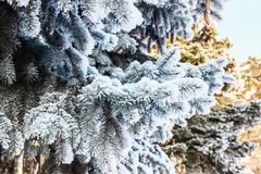 Winter landscape. Snowy nature. Snow-covered forest. Christmas weather. Snow snow royalty free stock image