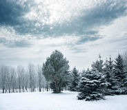 Winter Landscape with Snowy Park Royalty Free Stock Photos