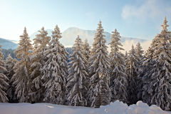 Winter Landscape Royalty Free Stock Photos