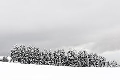 Winter landscape with snowy pines Stock Photo
