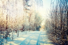 Winter Landscape. Snowy Road in Forest. Stock Images
