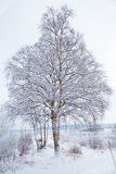 Winter landscape with snowy tree Stock Images