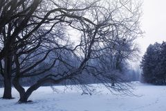 Winter landscape of snowy tree Royalty Free Stock Image