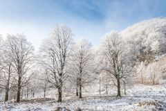 A Winter landscape. Winter landscape with snowy trees stock photo
