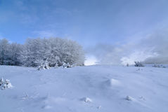 Winter landscape with snowy trees Royalty Free Stock Photo