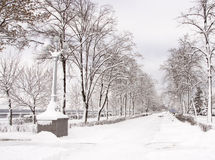 Winter landscape. With snowy trees Royalty Free Stock Image