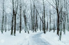 Winter landscape. Snowy trees along the winter park, winter snowy nature Royalty Free Stock Photos