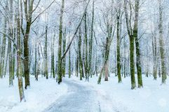 Winter landscape. Snowy trees along the winter park, winter snowy nature Royalty Free Stock Photography