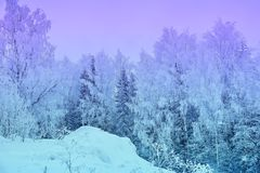 Winter landscape snowy trees beautiful sunset fanciful frosty tr royalty free stock image