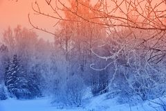 Winter landscape snowy trees beautiful sunset fanciful frosty tr stock image