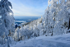 Winter Landscape With Snowy Trees Royalty Free Stock Images