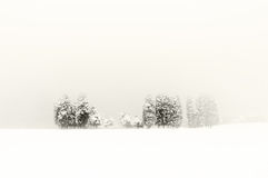 Winter landscape with snowy trees Stock Images