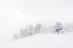 Winter landscape with snowy trees on blizzard stock photography