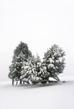 Winter landscape with snowy trees Stock Photography