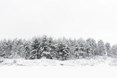 Winter landscape with snowy trees Stock Photos