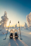 Winter landscape with snowy trees and snowshoes Stock Image