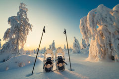 Winter landscape with snowy trees and snowshoes Stock Images