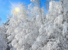 Winter landscape with snowy trees stock photo