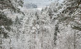 Winter landscape with snowy trees Stock Image