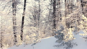 Winter landscape. Snowy winter in forest. Panning on winter forest stock video