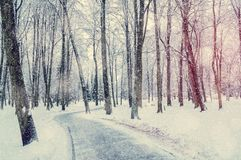 Winter landscape with snowy winter trees along the winter park alley - winter snowy scene royalty free stock photos