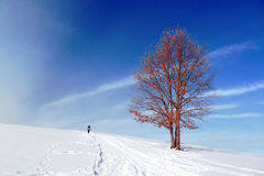 Winter landscape with solitary tree and person walking Royalty Free Stock Images