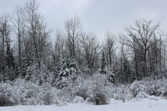 Winter Landscape. In Southern Quebec royalty free stock images