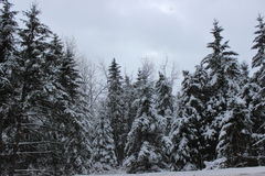 Winter Landscape. In Southern Quebec royalty free stock photography
