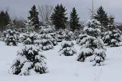 Winter Landscape. In Southern Quebec royalty free stock image