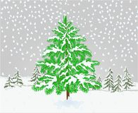 Winter landscape Spruce tree with snow christmas theme natural background vintage vector illustration editable. Hand draw stock illustration