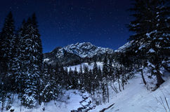Winter landscape in a starry night Royalty Free Stock Photos