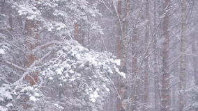Winter landscape. Static view of winter forest, defocus stock video footage