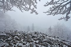 Winter Landscape. Stone of sea landscape with snow and dark grey foggy sky and branches with white snow rime during cold winter. S stock image