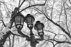 Winter landscape with street lamps in the park. Royalty Free Stock Images