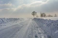 Winter landscape in strong wind Stock Image