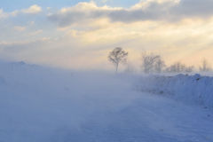 Winter landscape in strong wind Royalty Free Stock Photo