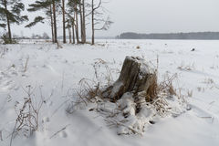 Winter landscape with stump Royalty Free Stock Images