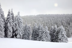 Winter Landscape With Sun Royalty Free Stock Photo