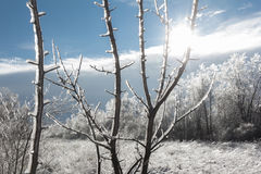 Winter landscape with sun shining through ice-covered branches Royalty Free Stock Photography