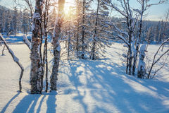 Winter Landscape with sun, snow, trees and shadows Stock Image
