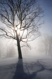 Winter Landscape with Sunburst Royalty Free Stock Photos