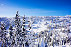 Winter landscape. In sunny day Royalty Free Stock Photo