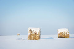 Winter landscape in sunny day with clear blue sky and hay rolls Royalty Free Stock Images