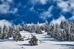 Winter landscape on a sunny day Stock Image