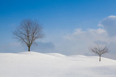 Winter landscape in sunny day Stock Photography