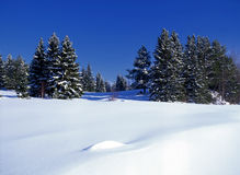 Winter landscape of sunny forest Stock Photo