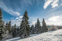 Winter Landscape with Sunny Forest Stock Photos
