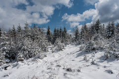 Winter Landscape with Sunny Forest Royalty Free Stock Photography