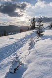 Winter Landscape with Sunny Forest Royalty Free Stock Image